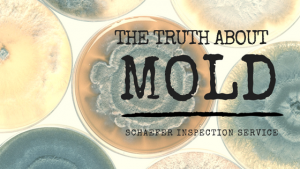 The Truth About Mold - Schaefer Inspection Service